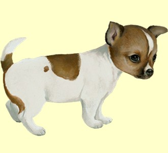Chihuahua ##STADE## - manto 60